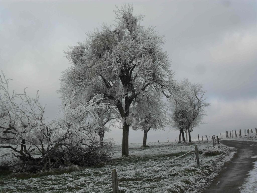 Paysage d' hiver